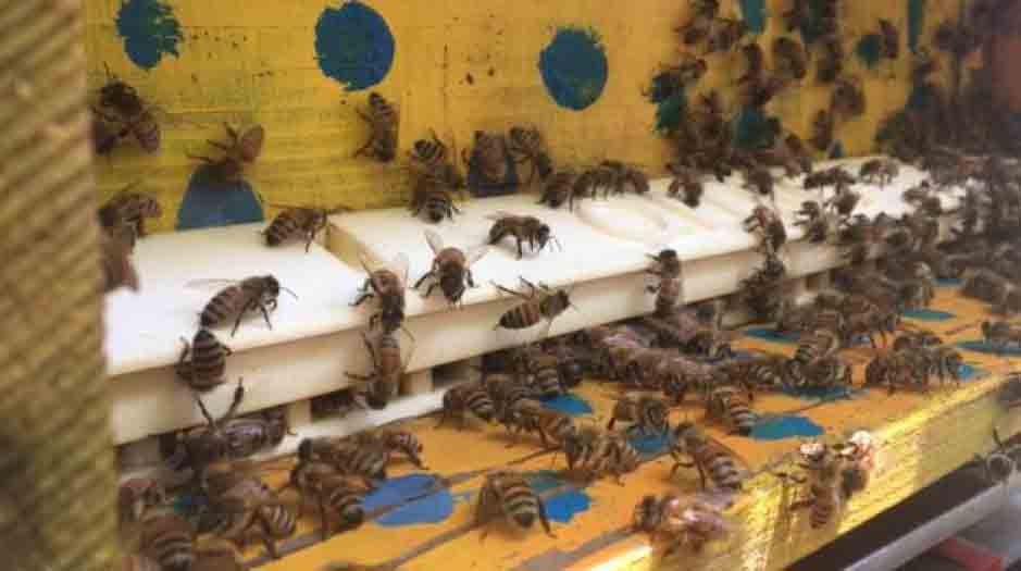 european project improves bee health 1