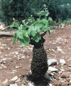 Produit pour attirer les abeilles comment attirer les - Comment attirer des oiseaux dans son jardin ...