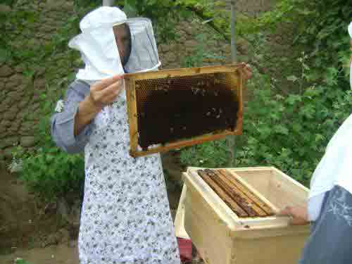 agri apiculture afghanistan 3