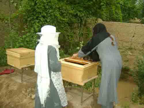 agri apiculture afghanistan 4