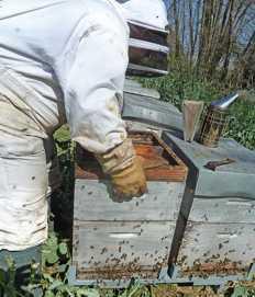 apiculteur 63190