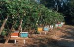 Service de pollinisation