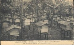 apiculteur007.jpg