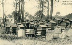 apiculteur008.jpg