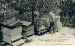apiculteur009.jpg