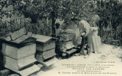 apiculteur010.jpg