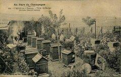 apiculteur022.jpg