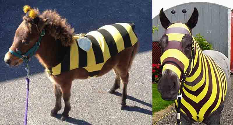 chevaux_en_costume_abeille.jpg